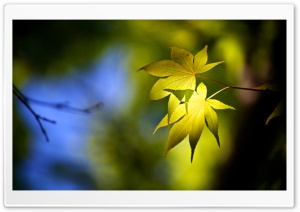 Forest Leaves HD Wide Wallpaper for Widescreen