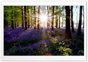 Forest Lens Flare HD Wide Wallpaper for Widescreen