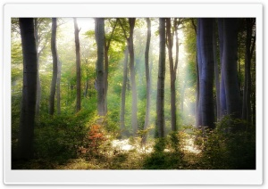 Forest Light HD Wide Wallpaper for Widescreen