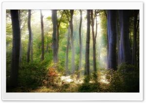 Forest Light HD Wide Wallpaper for 4K UHD Widescreen desktop & smartphone