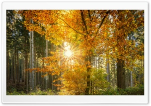 Forest Light Rays HD Wide Wallpaper for Widescreen