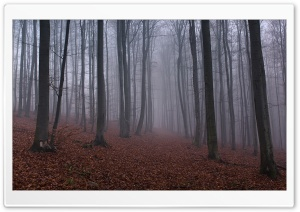 Forest Mist HD Wide Wallpaper for Widescreen