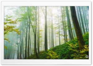 Forest Morning Light Ultra HD Wallpaper for 4K UHD Widescreen desktop, tablet & smartphone