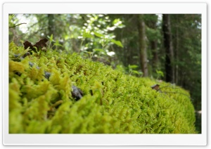 Forest Moss HD Wide Wallpaper for Widescreen