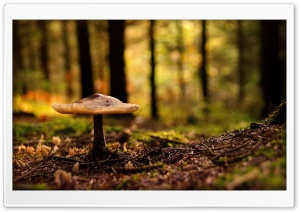 Forest Mushroom HD Wide Wallpaper for Widescreen