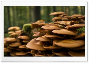 Forest Mushrooms HD Wide Wallpaper for Widescreen