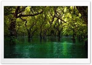 Forest over Water HD Wide Wallpaper for 4K UHD Widescreen desktop & smartphone