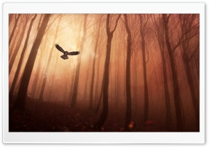 Forest Owl HD Wide Wallpaper for 4K UHD Widescreen desktop & smartphone