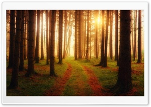 Forest Path Ultra HD Wallpaper for 4K UHD Widescreen desktop, tablet & smartphone