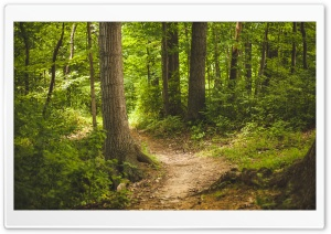 Forest Path HD Wide Wallpaper for Widescreen