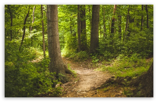 Forest Path ❤ 4K UHD Wallpaper for Wide 16:10 5:3 Widescreen WHXGA WQXGA WUXGA WXGA WGA ; 4K UHD 16:9 Ultra High Definition 2160p 1440p 1080p 900p 720p ; UHD 16:9 2160p 1440p 1080p 900p 720p ; Standard 4:3 5:4 3:2 Fullscreen UXGA XGA SVGA QSXGA SXGA DVGA HVGA HQVGA ( Apple PowerBook G4 iPhone 4 3G 3GS iPod Touch ) ; Smartphone 16:9 3:2 5:3 2160p 1440p 1080p 900p 720p DVGA HVGA HQVGA ( Apple PowerBook G4 iPhone 4 3G 3GS iPod Touch ) WGA ; Tablet 1:1 ; iPad 1/2/Mini ; Mobile 4:3 5:3 3:2 16:9 5:4 - UXGA XGA SVGA WGA DVGA HVGA HQVGA ( Apple PowerBook G4 iPhone 4 3G 3GS iPod Touch ) 2160p 1440p 1080p 900p 720p QSXGA SXGA ;