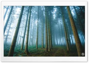 Forest Path, Fog Ultra HD Wallpaper for 4K UHD Widescreen desktop, tablet & smartphone