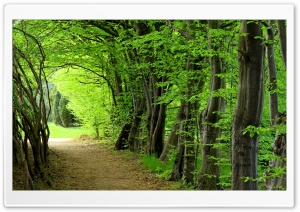 Forest Path, Summer HD Wide Wallpaper for Widescreen