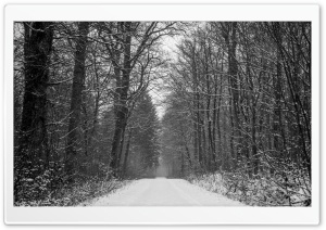 Forest Path Winter HD Wide Wallpaper for Widescreen