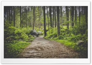 Forest Pathway HD Wide Wallpaper for Widescreen