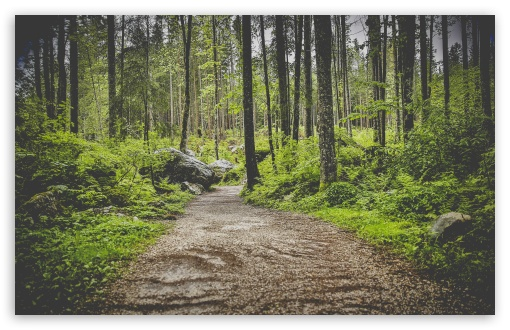 Forest Pathway ❤ 4K UHD Wallpaper for Wide 16:10 5:3 Widescreen WHXGA WQXGA WUXGA WXGA WGA ; 4K UHD 16:9 Ultra High Definition 2160p 1440p 1080p 900p 720p ; UHD 16:9 2160p 1440p 1080p 900p 720p ; Standard 4:3 5:4 3:2 Fullscreen UXGA XGA SVGA QSXGA SXGA DVGA HVGA HQVGA ( Apple PowerBook G4 iPhone 4 3G 3GS iPod Touch ) ; Smartphone 5:3 WGA ; Tablet 1:1 ; iPad 1/2/Mini ; Mobile 4:3 5:3 3:2 16:9 5:4 - UXGA XGA SVGA WGA DVGA HVGA HQVGA ( Apple PowerBook G4 iPhone 4 3G 3GS iPod Touch ) 2160p 1440p 1080p 900p 720p QSXGA SXGA ; Dual 16:10 5:3 16:9 4:3 5:4 WHXGA WQXGA WUXGA WXGA WGA 2160p 1440p 1080p 900p 720p UXGA XGA SVGA QSXGA SXGA ;
