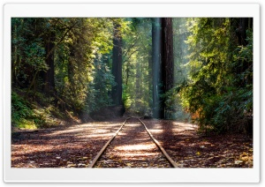 Forest, RedWoods, Tall Trees, Train Track Ultra HD Wallpaper for 4K UHD Widescreen desktop, tablet & smartphone