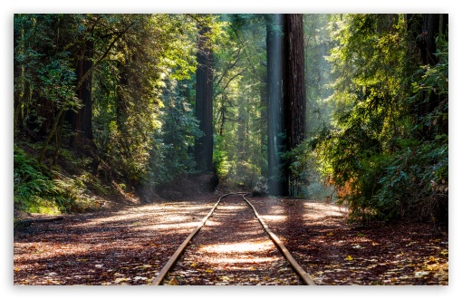 Forest, RedWoods, Tall Trees, Train Track UltraHD Wallpaper for Wide 16:10 5:3 Widescreen WHXGA WQXGA WUXGA WXGA WGA ; UltraWide 21:9 24:10 ; 8K UHD TV 16:9 Ultra High Definition 2160p 1440p 1080p 900p 720p ; UHD 16:9 2160p 1440p 1080p 900p 720p ; Standard 4:3 5:4 3:2 Fullscreen UXGA XGA SVGA QSXGA SXGA DVGA HVGA HQVGA ( Apple PowerBook G4 iPhone 4 3G 3GS iPod Touch ) ; Smartphone 3:2 5:3 DVGA HVGA HQVGA ( Apple PowerBook G4 iPhone 4 3G 3GS iPod Touch ) WGA ; Tablet 1:1 ; iPad 1/2/Mini ; Mobile 4:3 5:3 3:2 16:9 5:4 - UXGA XGA SVGA WGA DVGA HVGA HQVGA ( Apple PowerBook G4 iPhone 4 3G 3GS iPod Touch ) 2160p 1440p 1080p 900p 720p QSXGA SXGA ;