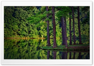 Forest Reflection HD Wide Wallpaper for Widescreen