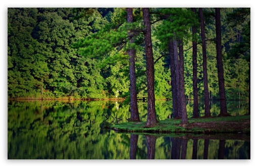 Forest Reflection HD wallpaper for Wide 16:10 5:3 Widescreen WHXGA WQXGA WUXGA WXGA WGA ; HD 16:9 High Definition WQHD QWXGA 1080p 900p 720p QHD nHD ; Standard 4:3 5:4 3:2 Fullscreen UXGA XGA SVGA QSXGA SXGA DVGA HVGA HQVGA devices ( Apple PowerBook G4 iPhone 4 3G 3GS iPod Touch ) ; Tablet 1:1 ; iPad 1/2/Mini ; Mobile 4:3 5:3 3:2 16:9 5:4 - UXGA XGA SVGA WGA DVGA HVGA HQVGA devices ( Apple PowerBook G4 iPhone 4 3G 3GS iPod Touch ) WQHD QWXGA 1080p 900p 720p QHD nHD QSXGA SXGA ;