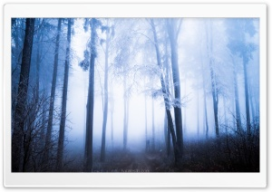 Forest, Rime on Tall Trees, Fog Ultra HD Wallpaper for 4K UHD Widescreen desktop, tablet & smartphone