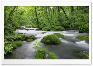 Forest River, Japan HD Wide Wallpaper for Widescreen