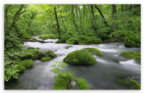 Forest River, Japan ❤ 4K UHD Wallpaper for Wide 16:10 5:3 Widescreen WHXGA WQXGA WUXGA WXGA WGA ; 4K UHD 16:9 Ultra High Definition 2160p 1440p 1080p 900p 720p ; Standard 4:3 5:4 3:2 Fullscreen UXGA XGA SVGA QSXGA SXGA DVGA HVGA HQVGA ( Apple PowerBook G4 iPhone 4 3G 3GS iPod Touch ) ; Tablet 1:1 ; iPad 1/2/Mini ; Mobile 4:3 5:3 3:2 16:9 5:4 - UXGA XGA SVGA WGA DVGA HVGA HQVGA ( Apple PowerBook G4 iPhone 4 3G 3GS iPod Touch ) 2160p 1440p 1080p 900p 720p QSXGA SXGA ;