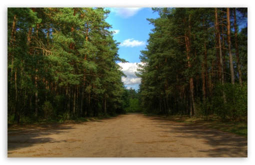 Forest Road HD wallpaper for Wide 16:10 5:3 Widescreen WHXGA WQXGA WUXGA WXGA WGA ; HD 16:9 High Definition WQHD QWXGA 1080p 900p 720p QHD nHD ; Standard 4:3 5:4 3:2 Fullscreen UXGA XGA SVGA QSXGA SXGA DVGA HVGA HQVGA devices ( Apple PowerBook G4 iPhone 4 3G 3GS iPod Touch ) ; Tablet 1:1 ; iPad 1/2/Mini ; Mobile 4:3 5:3 3:2 16:9 5:4 - UXGA XGA SVGA WGA DVGA HVGA HQVGA devices ( Apple PowerBook G4 iPhone 4 3G 3GS iPod Touch ) WQHD QWXGA 1080p 900p 720p QHD nHD QSXGA SXGA ;