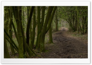 Forest Road 10 HD Wide Wallpaper for Widescreen