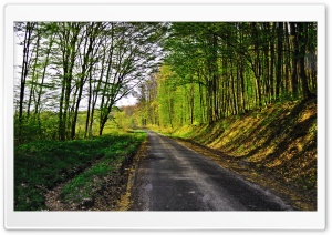 Forest Road HD Wide Wallpaper for Widescreen