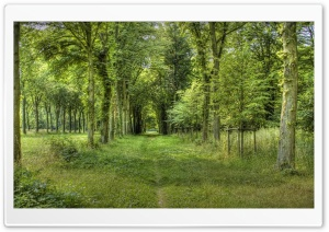 Forest Road 5 HD Wide Wallpaper for Widescreen