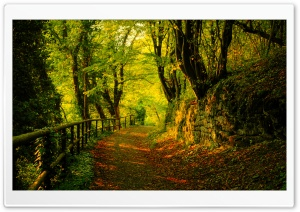 Forest Road 6 HD Wide Wallpaper for Widescreen