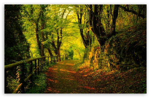 Download Forest Road 6 HD Wallpaper