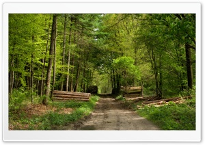 Forest Road 7 HD Wide Wallpaper for Widescreen