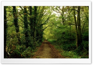 Forest Road 8 HD Wide Wallpaper for Widescreen
