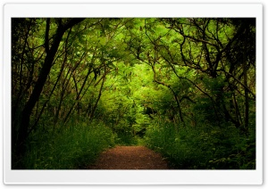 Forest Road 9 HD Wide Wallpaper for Widescreen