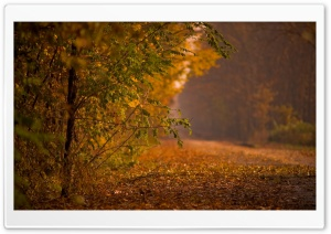 Forest Road, Autumn HD Wide Wallpaper for Widescreen