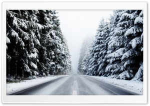 Forest Road In Winter HD Wide Wallpaper for 4K UHD Widescreen desktop & smartphone