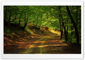 Forest Road, Summer HD Wide Wallpaper for Widescreen