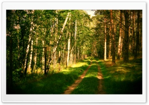 Forest Road Summertime Ultra HD Wallpaper for 4K UHD Widescreen desktop, tablet & smartphone