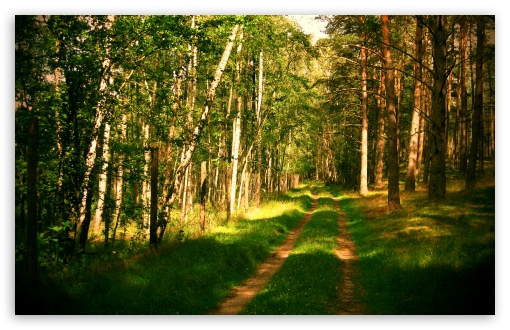 Forest Road Summertime HD wallpaper for Wide 16:10 5:3 Widescreen WHXGA WQXGA WUXGA WXGA WGA ; HD 16:9 High Definition WQHD QWXGA 1080p 900p 720p QHD nHD ; Standard 4:3 5:4 3:2 Fullscreen UXGA XGA SVGA QSXGA SXGA DVGA HVGA HQVGA devices ( Apple PowerBook G4 iPhone 4 3G 3GS iPod Touch ) ; Tablet 1:1 ; iPad 1/2/Mini ; Mobile 4:3 5:3 3:2 16:9 5:4 - UXGA XGA SVGA WGA DVGA HVGA HQVGA devices ( Apple PowerBook G4 iPhone 4 3G 3GS iPod Touch ) WQHD QWXGA 1080p 900p 720p QHD nHD QSXGA SXGA ; Dual 16:10 5:3 16:9 4:3 5:4 WHXGA WQXGA WUXGA WXGA WGA WQHD QWXGA 1080p 900p 720p QHD nHD UXGA XGA SVGA QSXGA SXGA ;