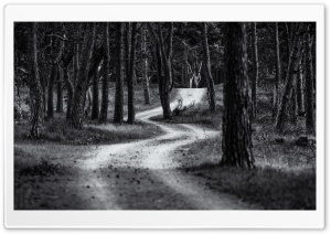 Forest Road, Trees, Black and White Ultra HD Wallpaper for 4K UHD Widescreen desktop, tablet & smartphone