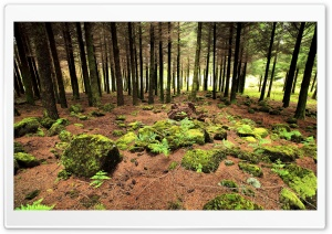 Forest Rocks HD Wide Wallpaper for Widescreen