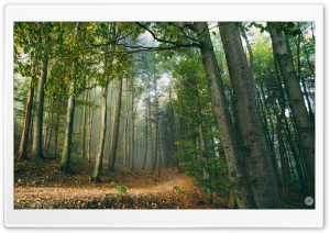 Forest Scene Ultra HD Wallpaper for 4K UHD Widescreen desktop, tablet & smartphone