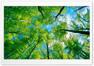 Forest Sky View HD Wide Wallpaper for Widescreen