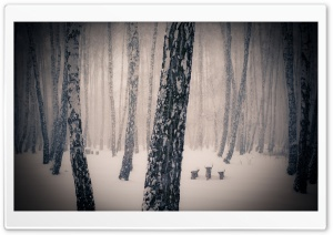 Forest Snowing HD Wide Wallpaper for Widescreen