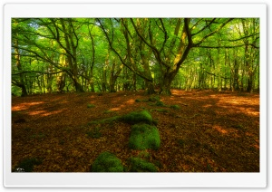 Forest Springtime HD Wide Wallpaper for Widescreen