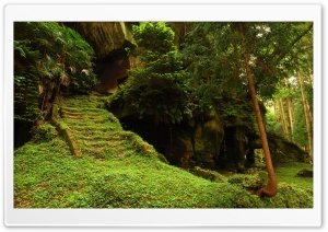 Forest Staircase Ruins HD Wide Wallpaper for 4K UHD Widescreen desktop & smartphone