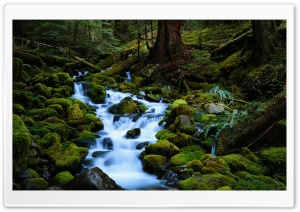 Forest Stream HD Wide Wallpaper for Widescreen
