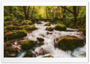Forest Stream HD Wide Wallpaper for 4K UHD Widescreen desktop & smartphone